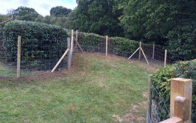 Safe Garden Dog Run